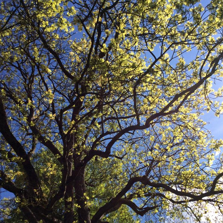 Bild von einem Baum